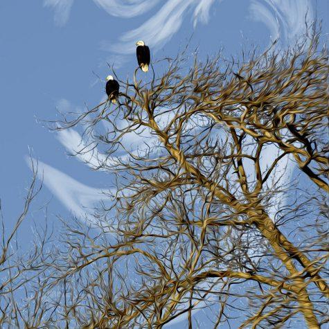 Fir Island Eagles - color