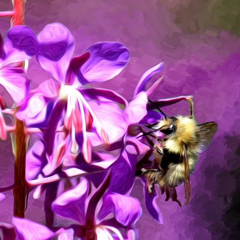 Fireweed and Bee