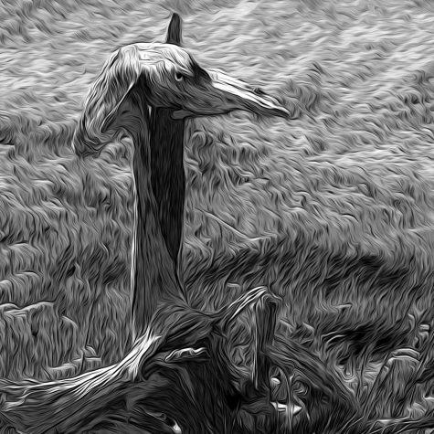 Swamp Bird